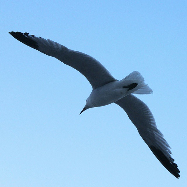 A seagull flying over the Mediterranean sea