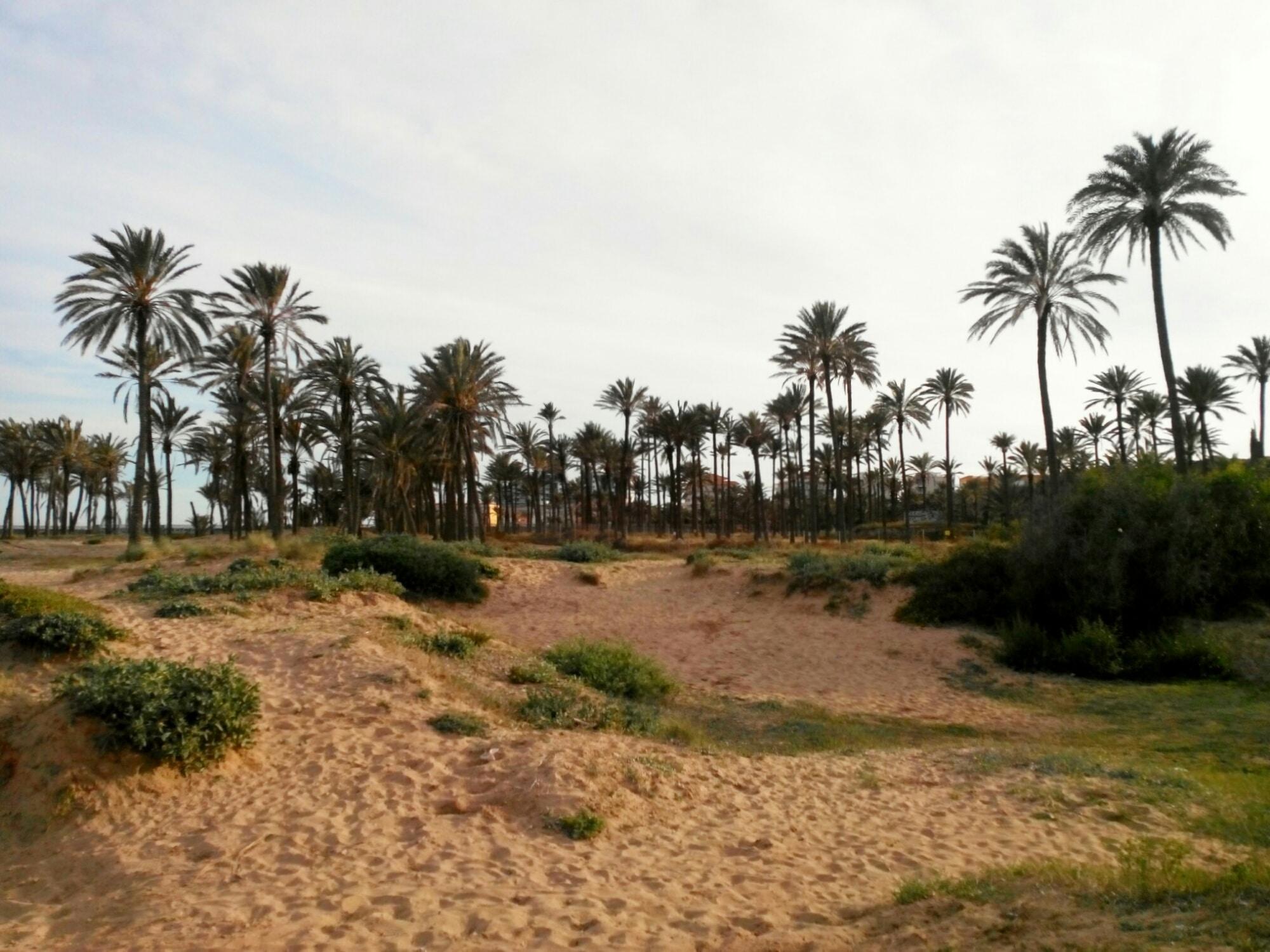 Cala Ferris Beach. Torrevieja, Spain