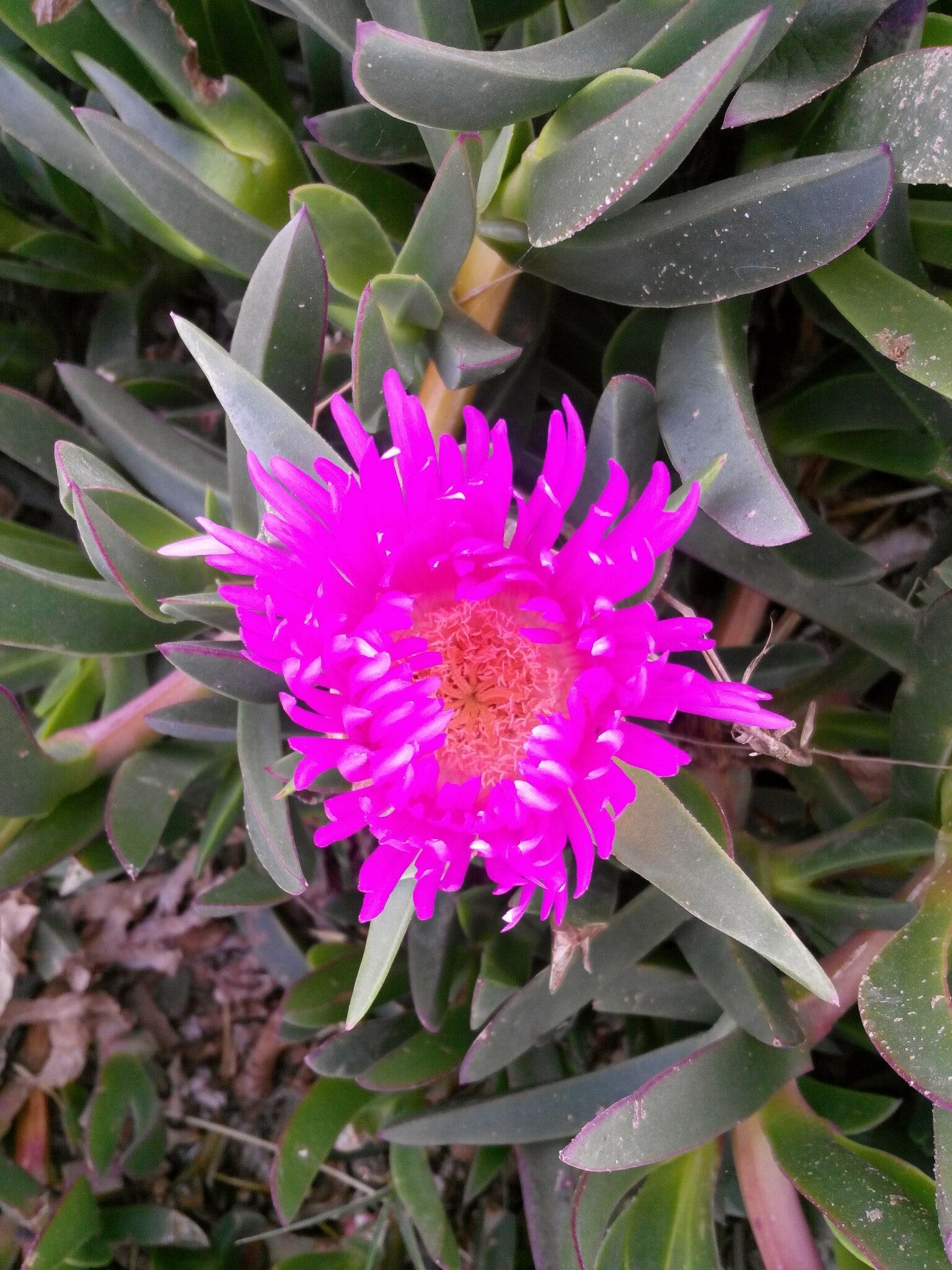 A flower near the beach